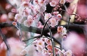 Eco Friendly Flowers