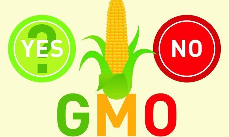 Are GMO'S Eco-Friendly?
