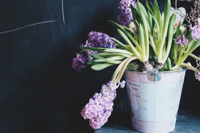 5 Things You Need for Green Living