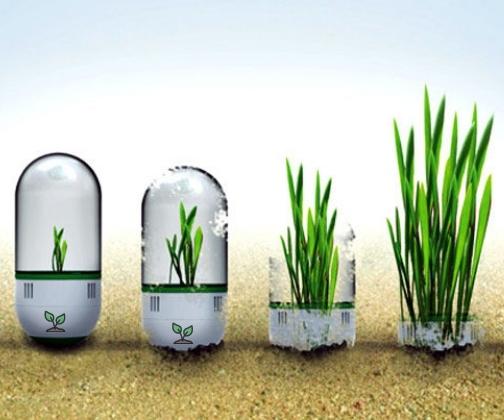 Seedbomb Plant Capsules