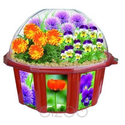 Indoor plants envirogadget for Fiori edibili