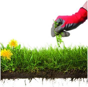 Phosphate free Garden