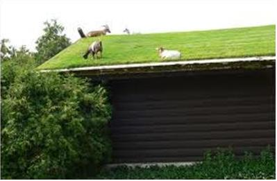 Green Roofing Specification And Standards Envirogadget