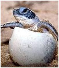 Lighting The Way For Baby Sea Turtles With Halco Amber Bulbs